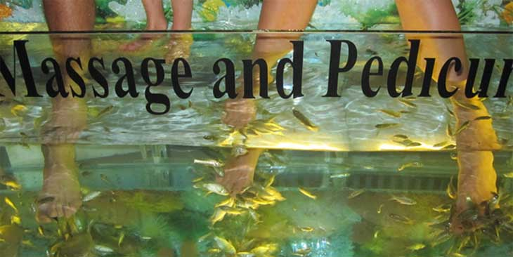 Doctor fish reflexology.