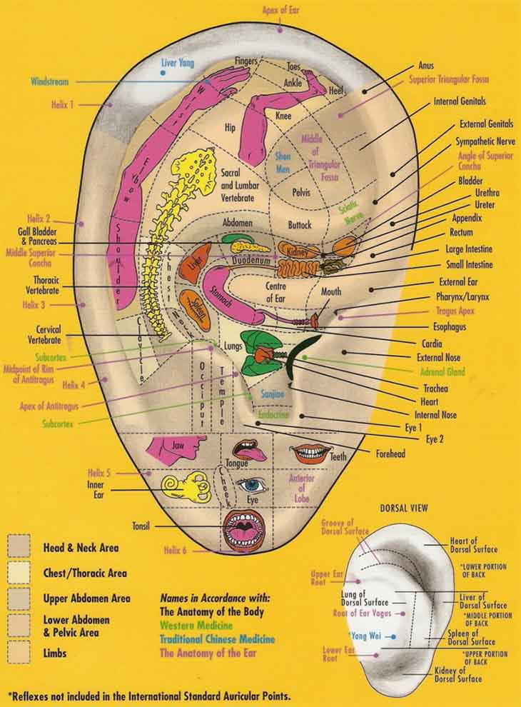 Ear reflexology: essential oils books chart.