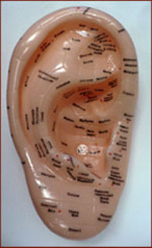 Ear reflexology.