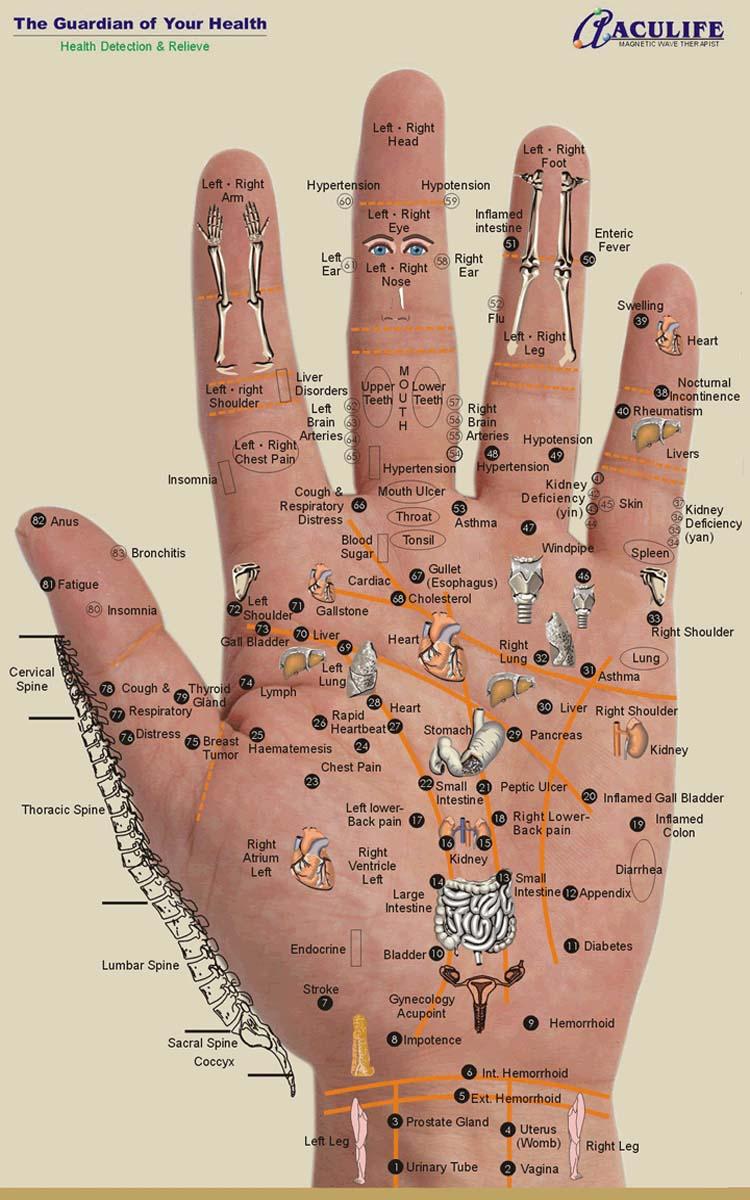 Hand reflexology chart: Aculife 1