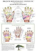 Hand reflexology map: Branch reflexology
