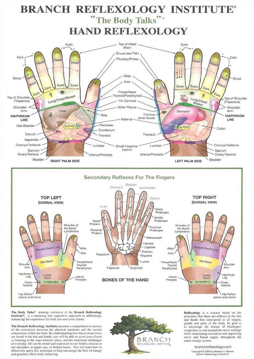 Hand reflexology: branch chart.