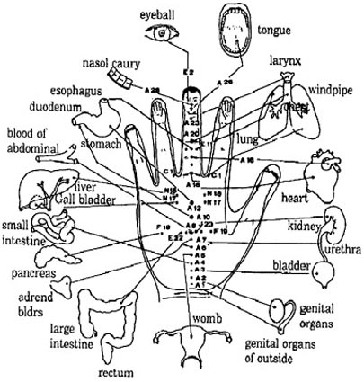 Hand Reflexology Research Scientific Reports