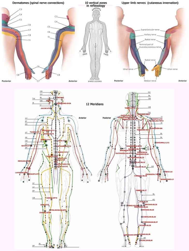 Hand reflexology zones: dermatomes, nerves & meridians.